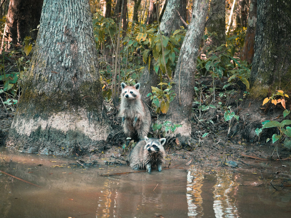 Hungry little babies. Bayou off of the Old Pearl River. Somewhere in Louisiana.