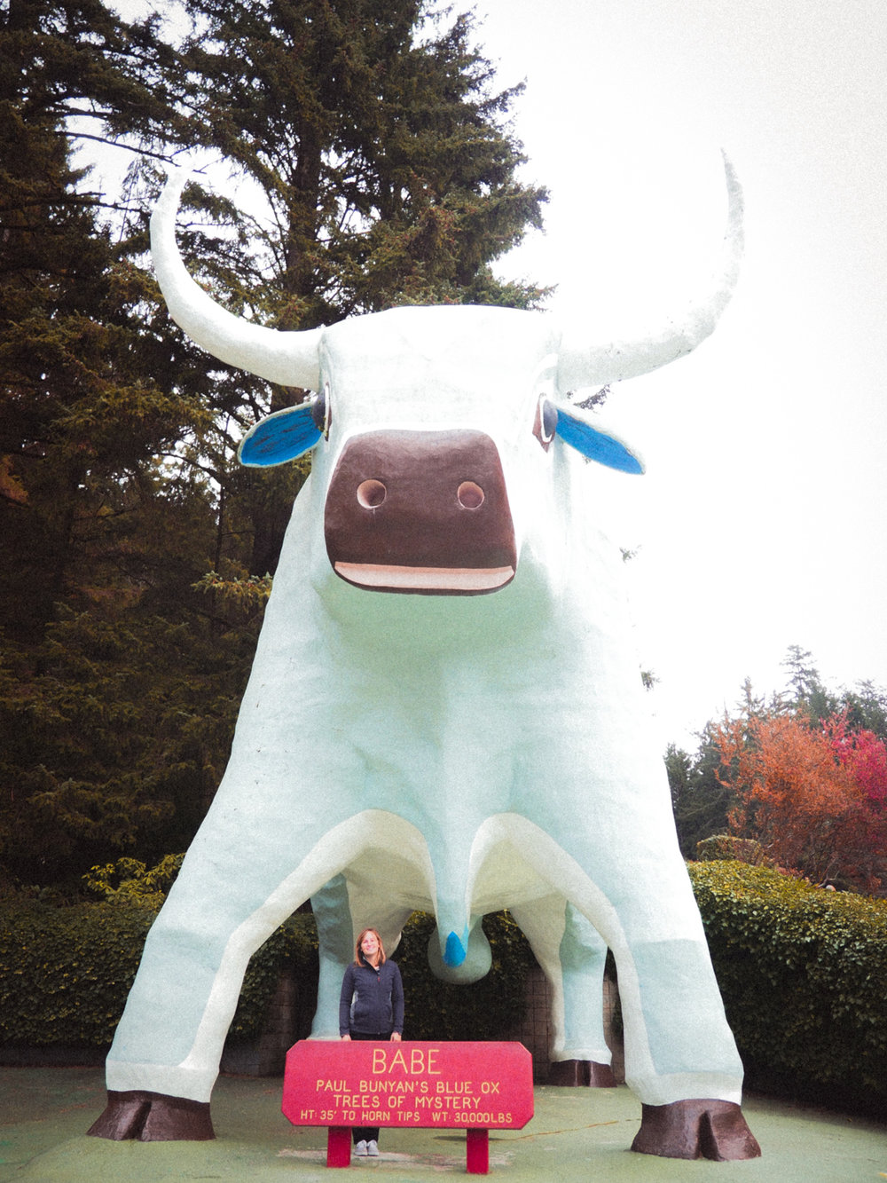 Babe the Blue Ox!