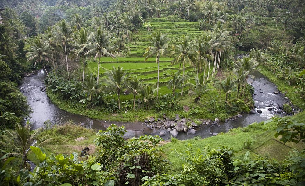 Stunning ricefields and the Ayung River | Gianyar, Bali