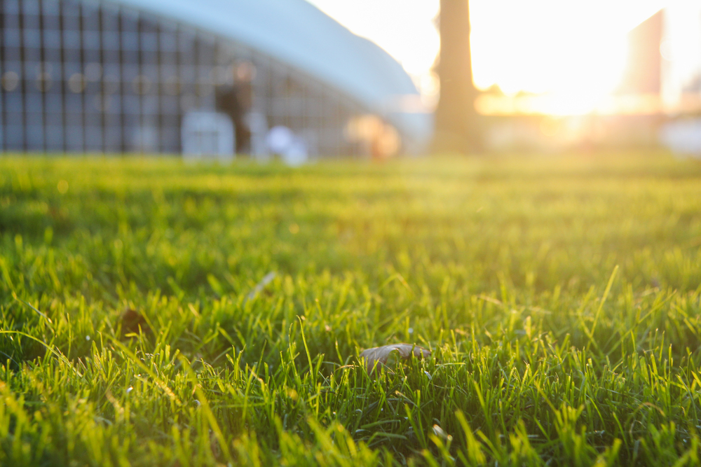 Kresge Auditorium Lawn