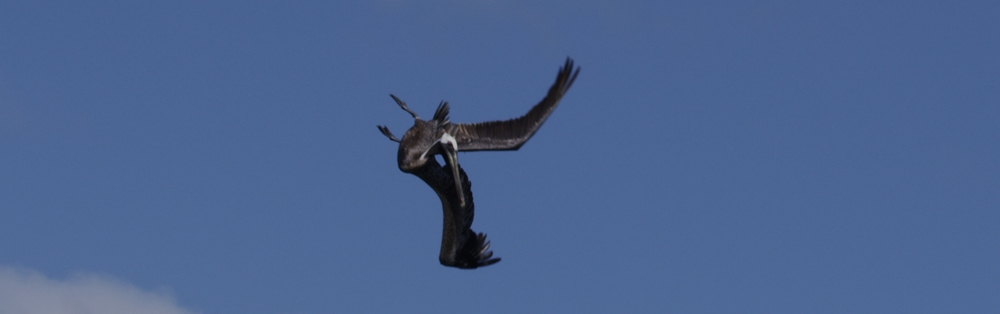 bird0.jpg
