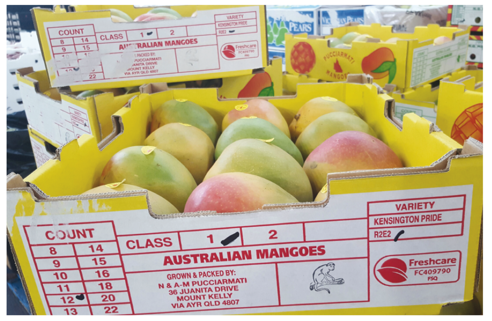 Mangoes in a Freshcare accredited tray.