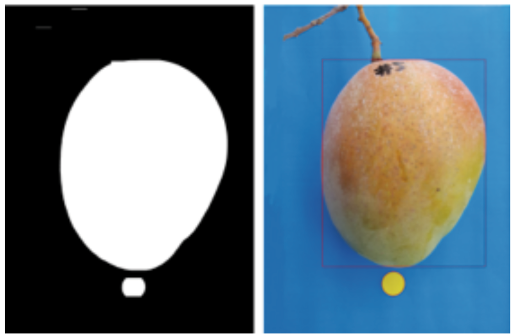 Figure 5. A fruit sizing mobile phoneapplication is currently in development.