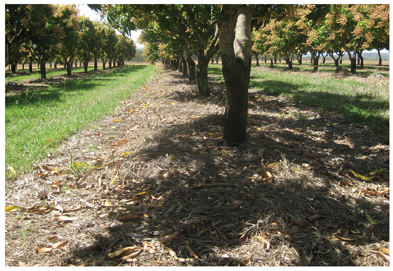 Mulched rows at Blushing Acres.