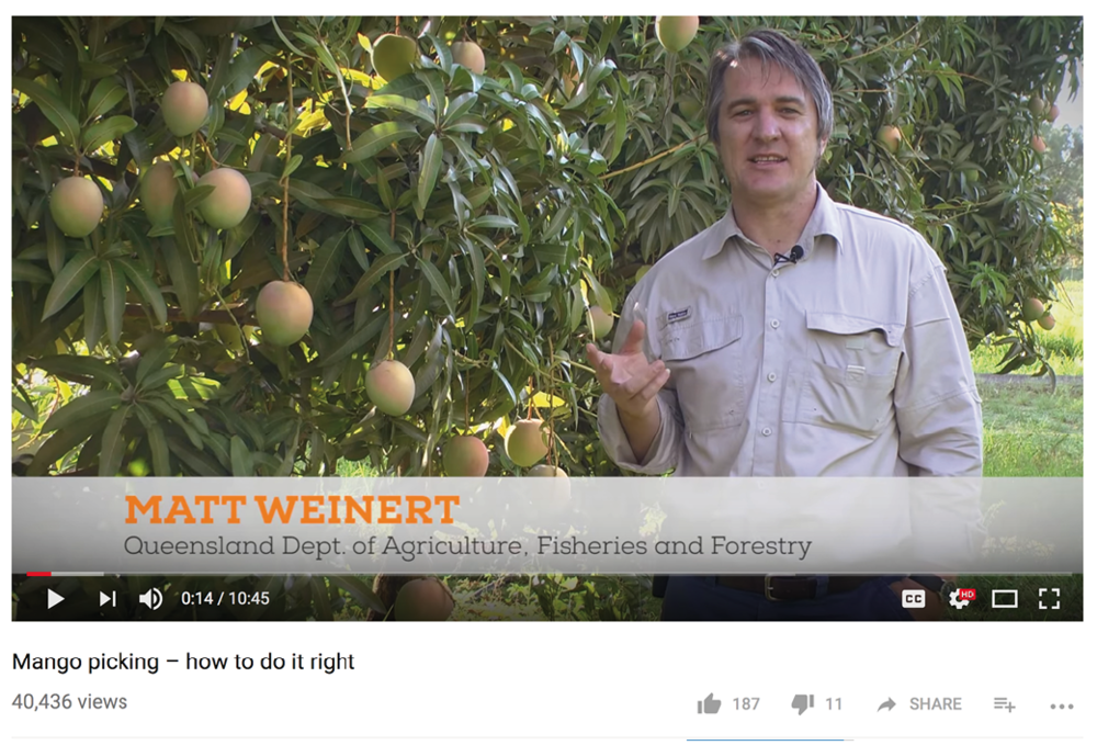 'Mango picking – how to do it right video' (2014), presented by Matt Weinert.
