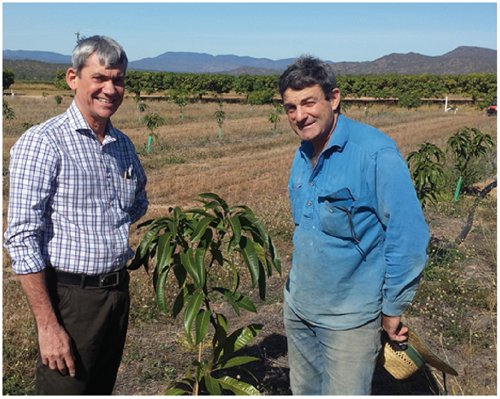 Mareeba-based Department of Agriculture and Fisheries' Principal Horticulturist Dr Ian Bally standing with mango grower Rai Bin in his new planting of variety NMBP-1243 at Mutchilba, Queensland.