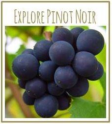 Explore Pinot Noir Masterclass