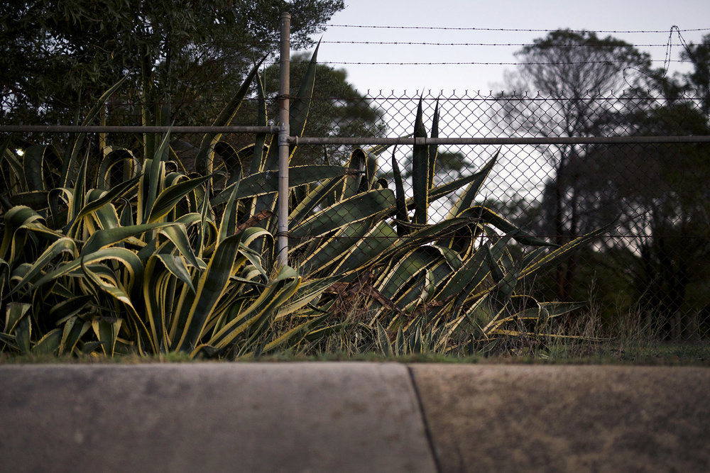Y cactus.jpg