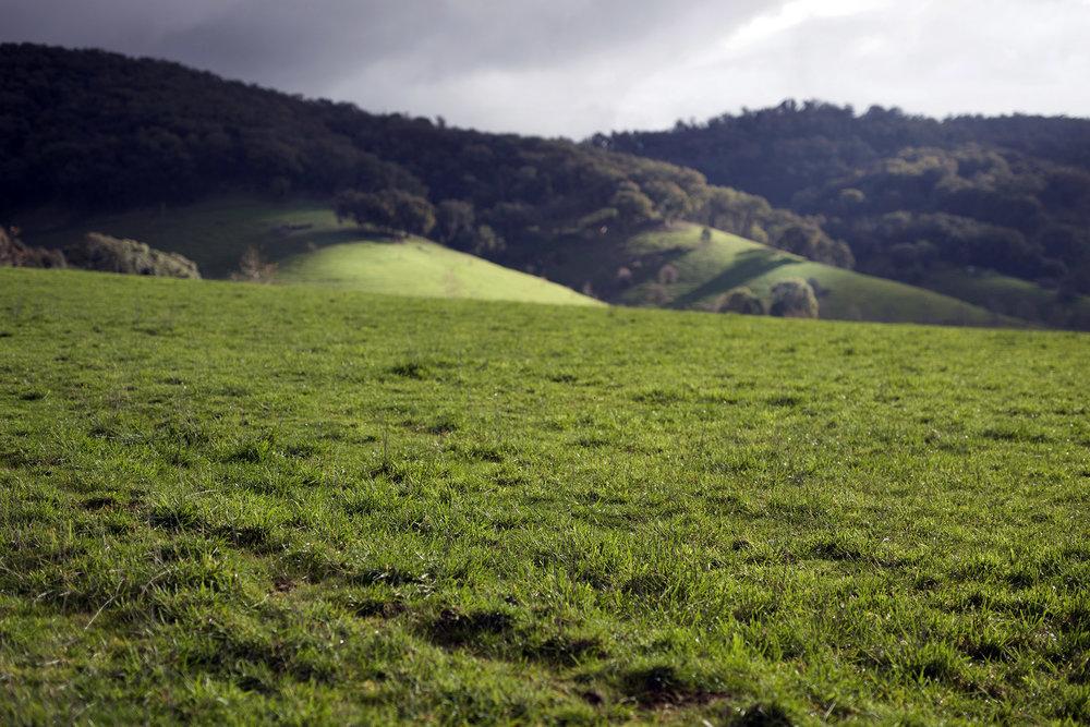 Y sun hills.jpg