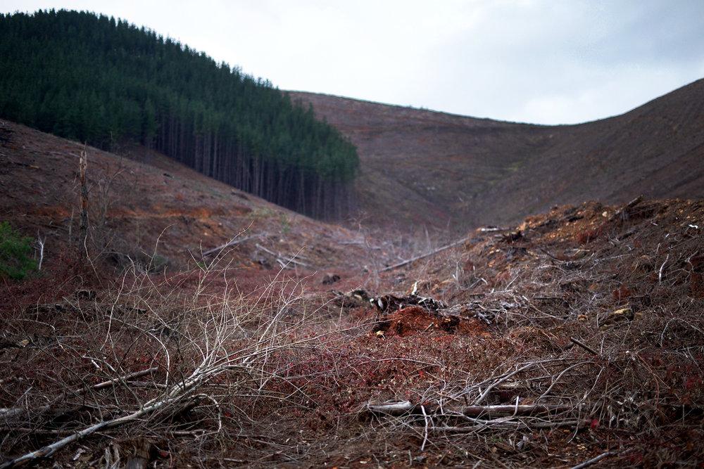 Y foresting.jpg