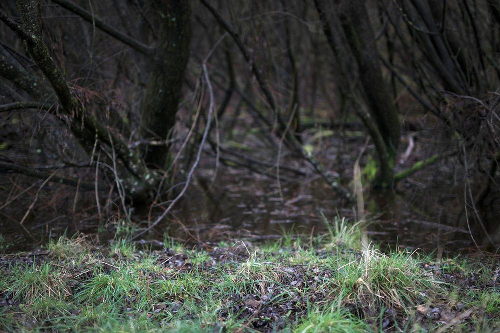 Y swamp 2.jpg