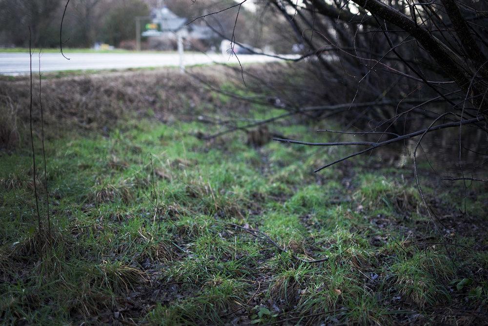 Y swamp.jpg