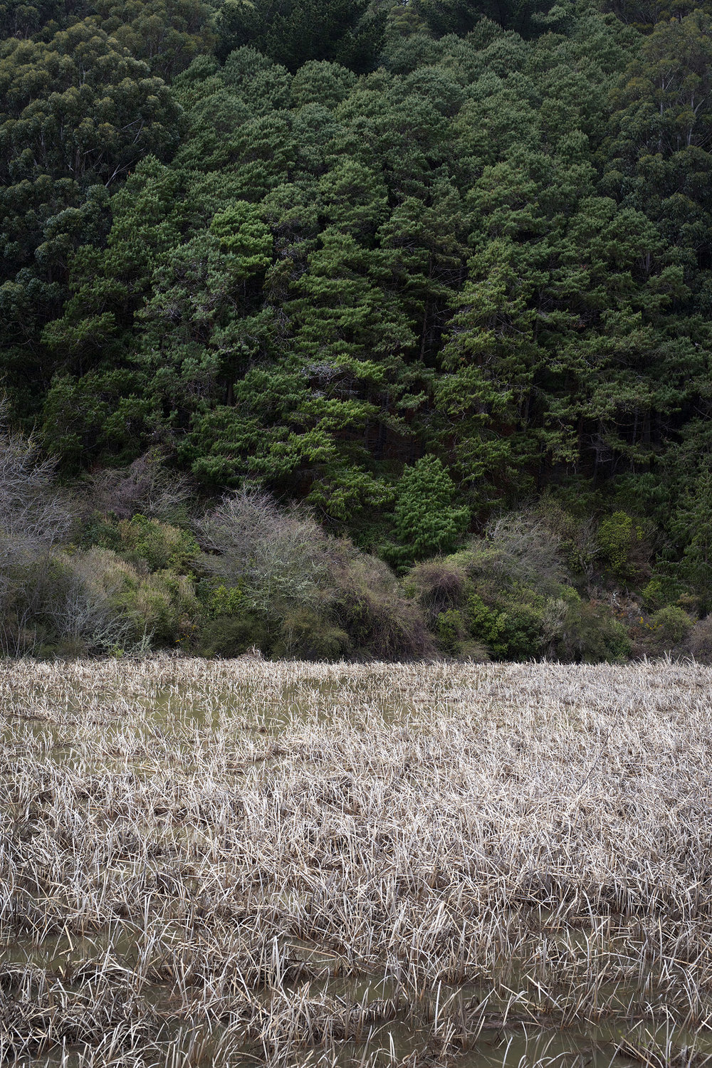 NZ grass and trees.jpg