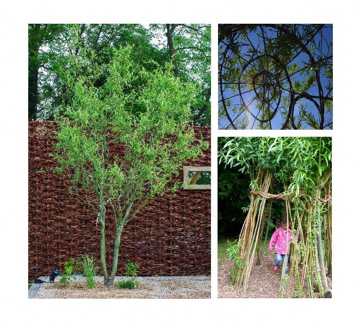Post-willow-_1_.jpg