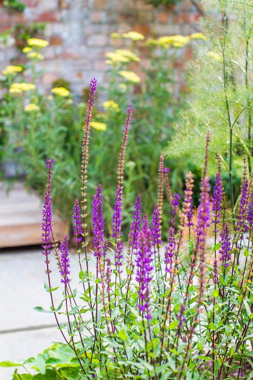 A contemporary walled garden