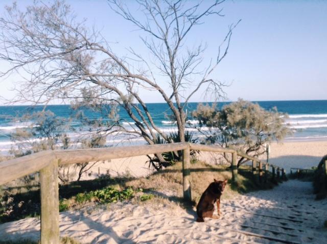 Morning walk with Bella at Peregian Beach