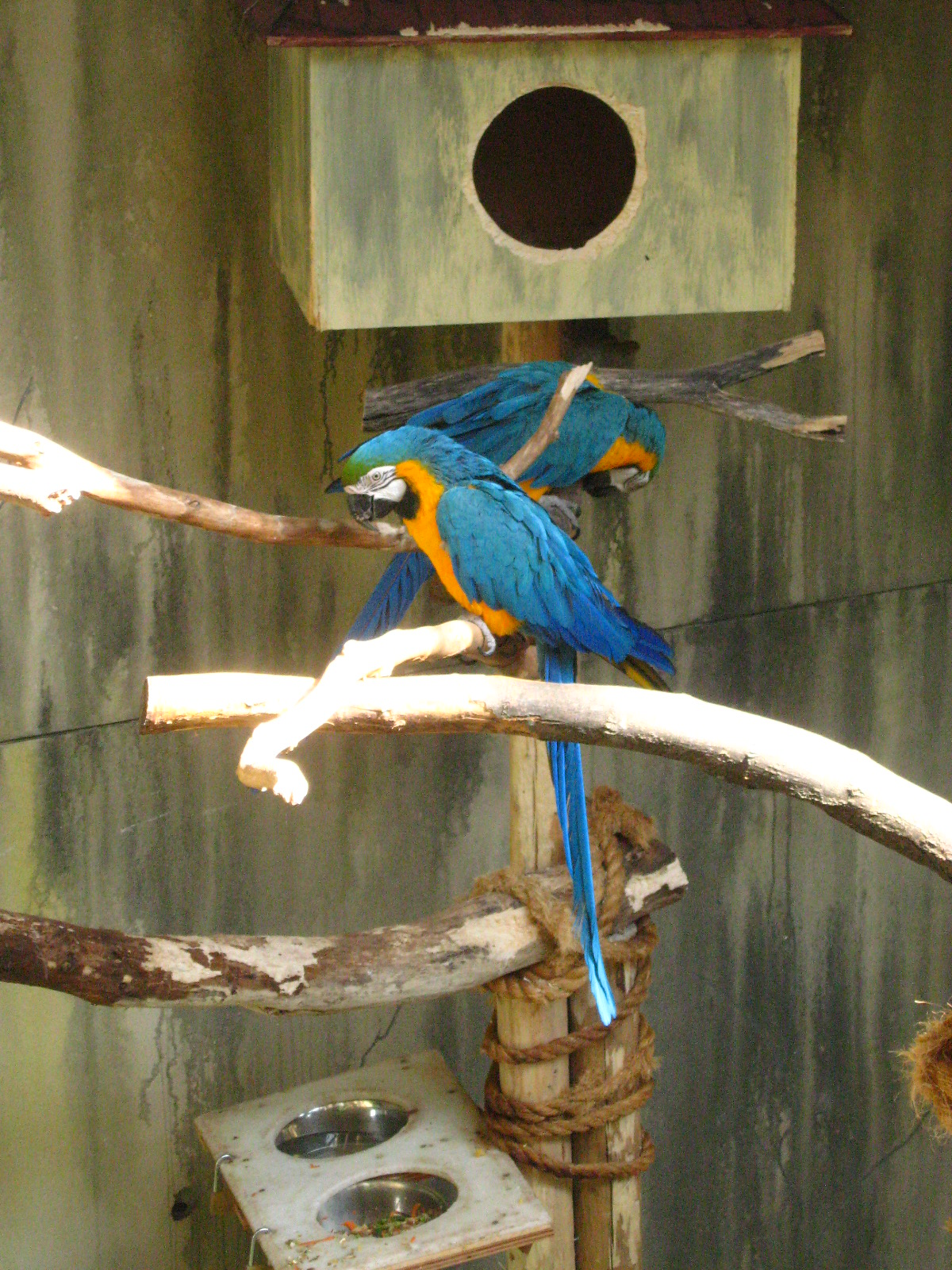 peace-and-awe :     macaws    my original photography - please do not remove credit