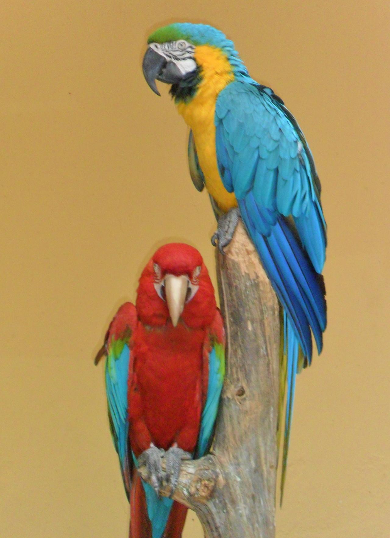 vwcampervan-aldridge :     Colourful parrots, Gran Canaria, Canary Islands   All Original Photography by     http://vwcampervan-aldridge.tumblr.com