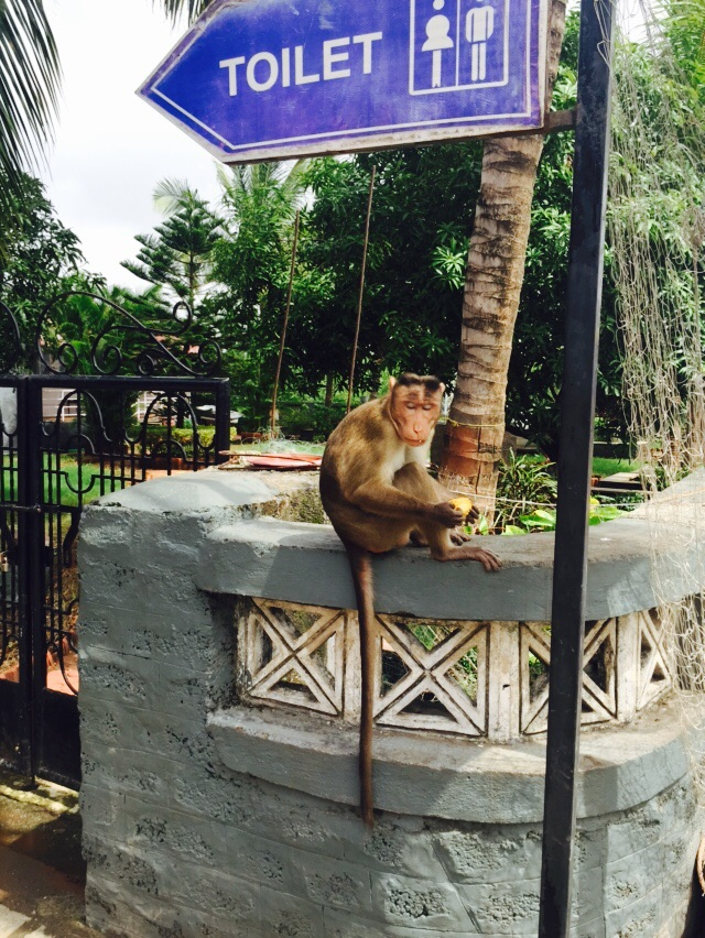 A monkey on Elephanta Island.