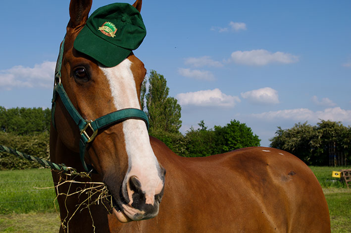 horse-and-hay-top-grass-haylage-edit.jpg