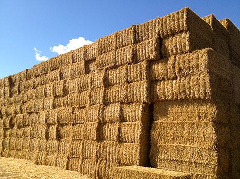 top-grass-haylage-straw.jpg