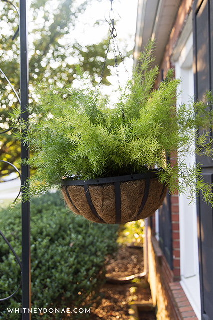 What's In Our Planters: Late Summer Edition