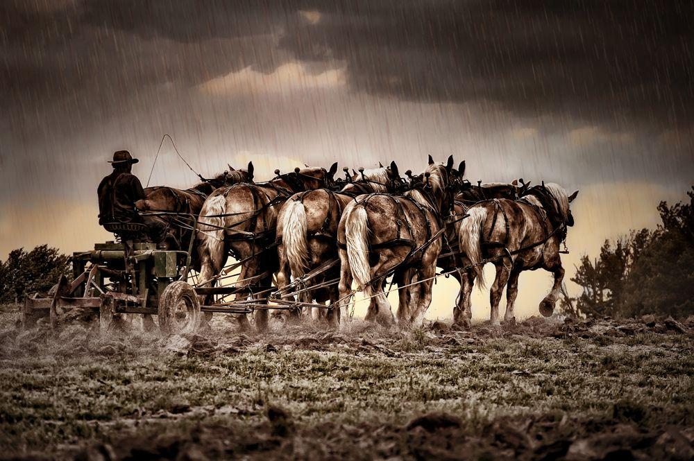 8 horses hitchedrain1000.jpg
