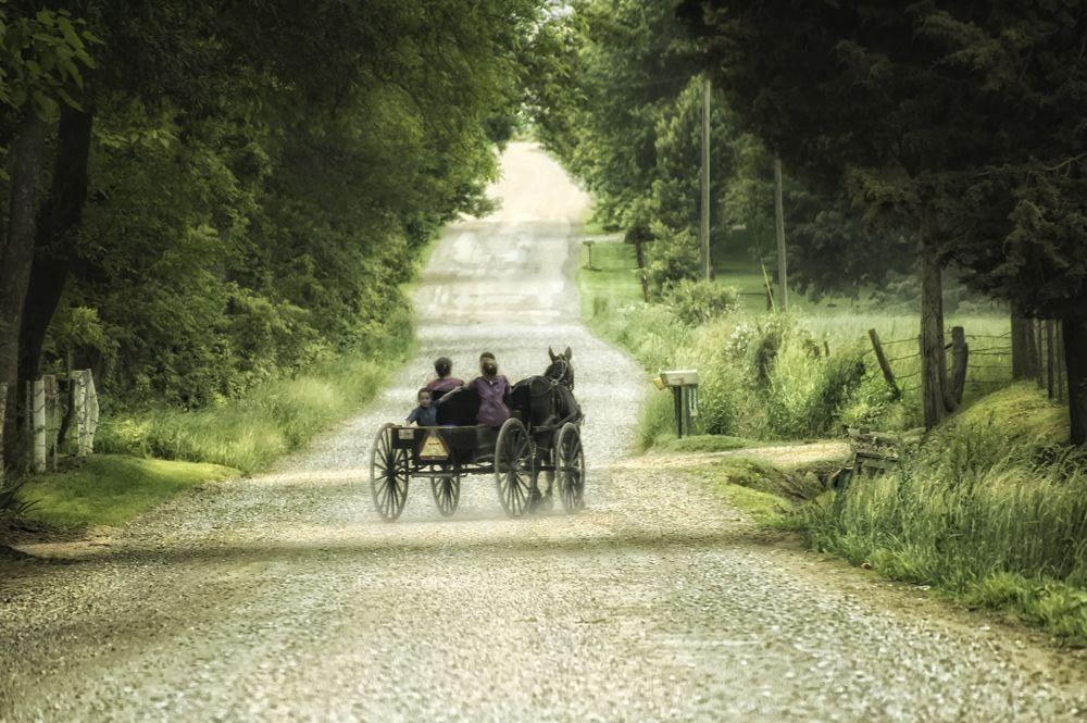 buggy ride1000.jpg