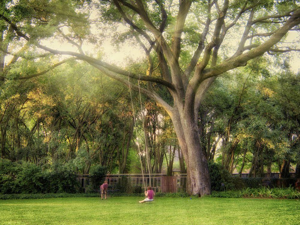 hamonie tree rays 1.jpg