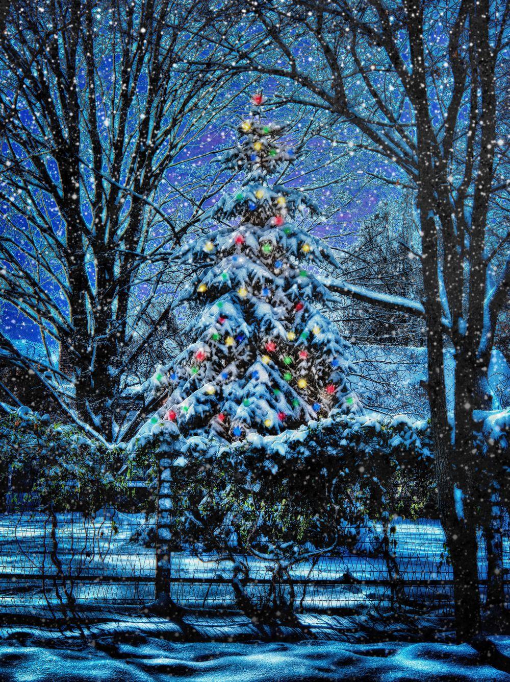 harmony christmas treesnow.jpg