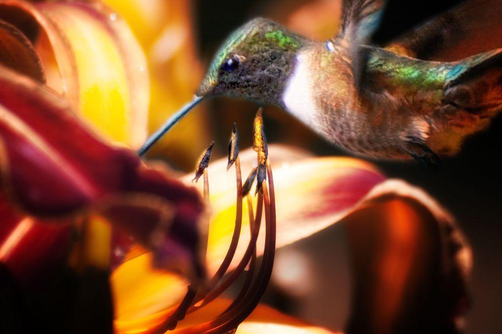 hummglow liliy.jpg
