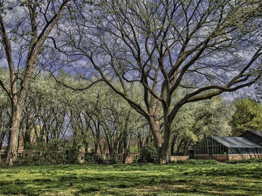 tree swing spring.jpg