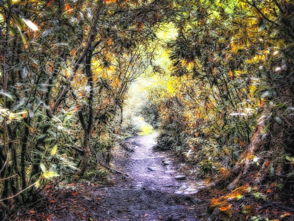 Path hdr copy - Copy - Copy.jpg