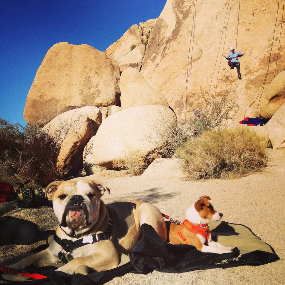"""Hanging at the Crag"", Joshua Tree National Park"