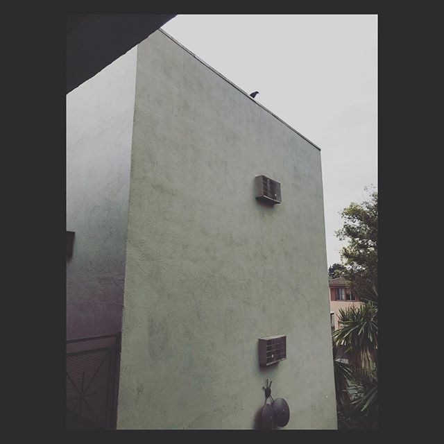 Guardian crow watching over the rainy day in Los Angeles. #losangeles #rain #cloud #overcast #photography #crow #bird #birdwatching #california #spring