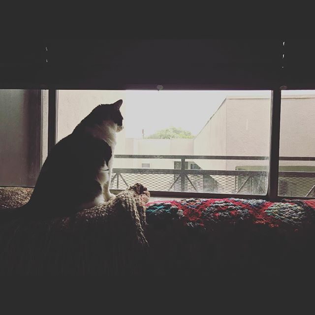 The longing. #catsofinstagram #losangeles #dream #photography #eurorack #modularsynth