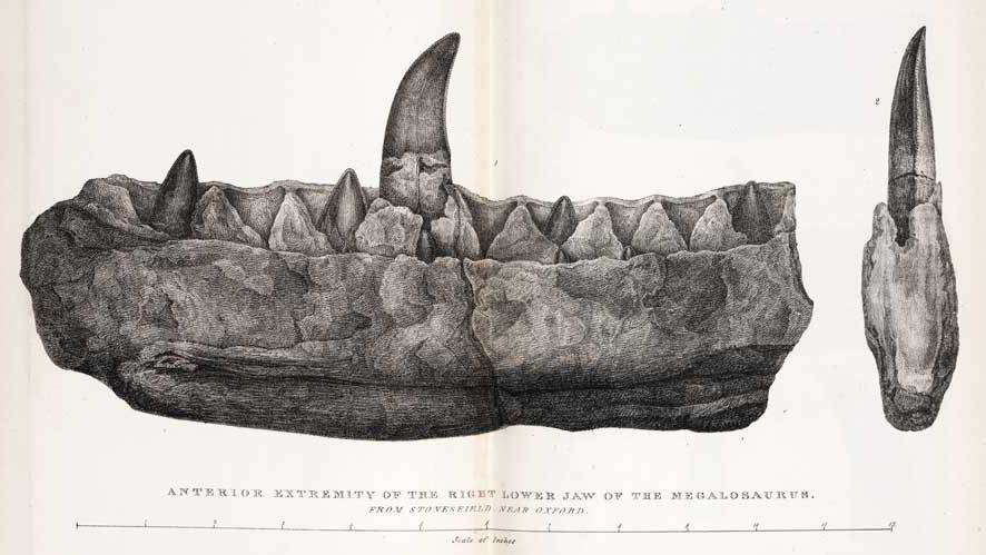 Megalosaurus fossil drawn by Mary Buckland