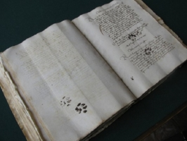 Paw prints on a manuscript