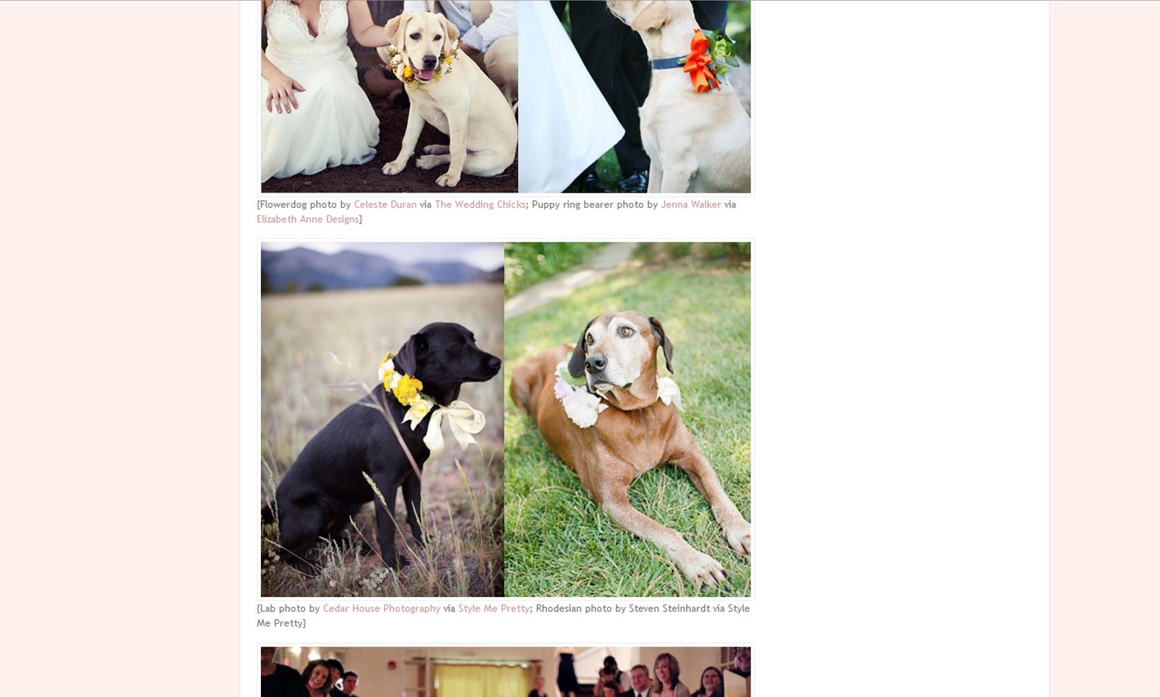 nathrop wedding photographer, colorado wedding photographer, dogs at weddings