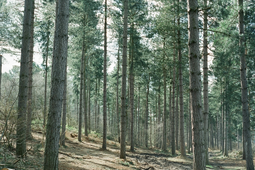 Trees in Forest.jpg