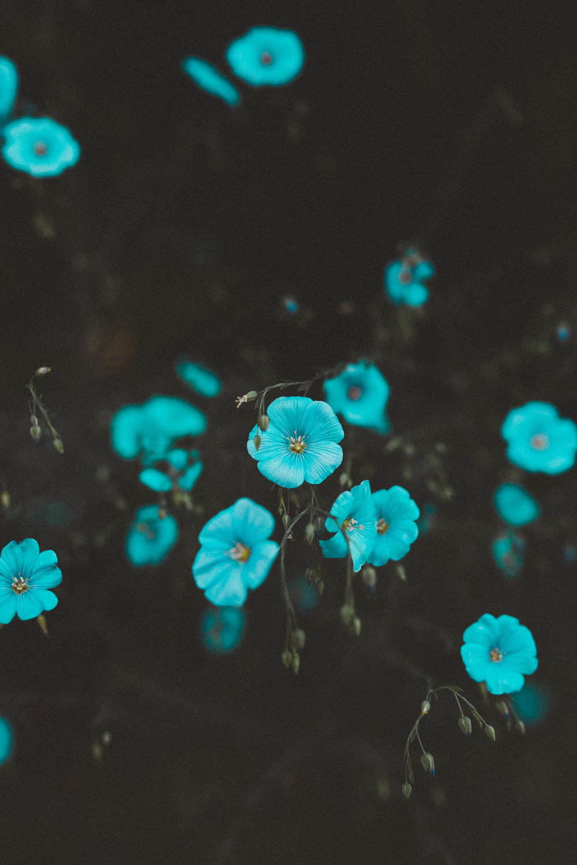 Flax Flower | Victorian Flower Language | Tien Austin Photography | Seattle, WA