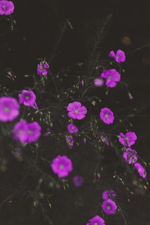 Victorian Flower Language | Flax Flower | Tien Austin Photography | Seattle, WA