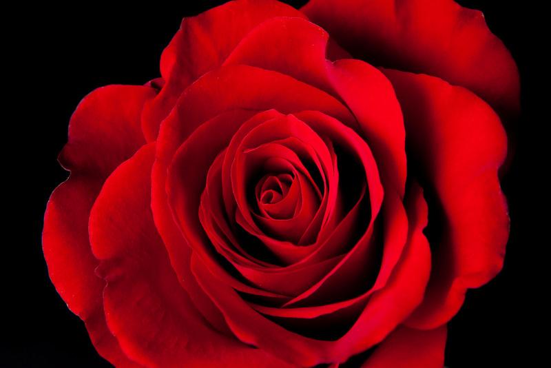 michele-rose1