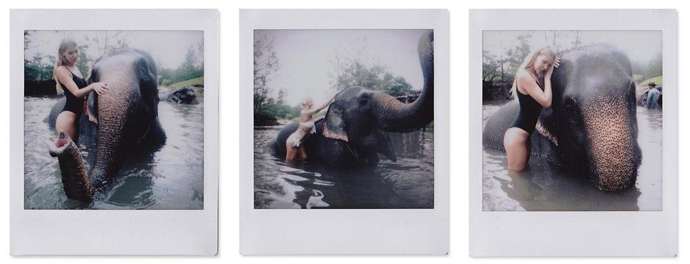 Elefantenbaden.jpg