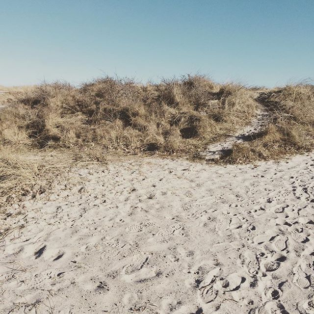 danish coast. #nordiclove #scandicrush