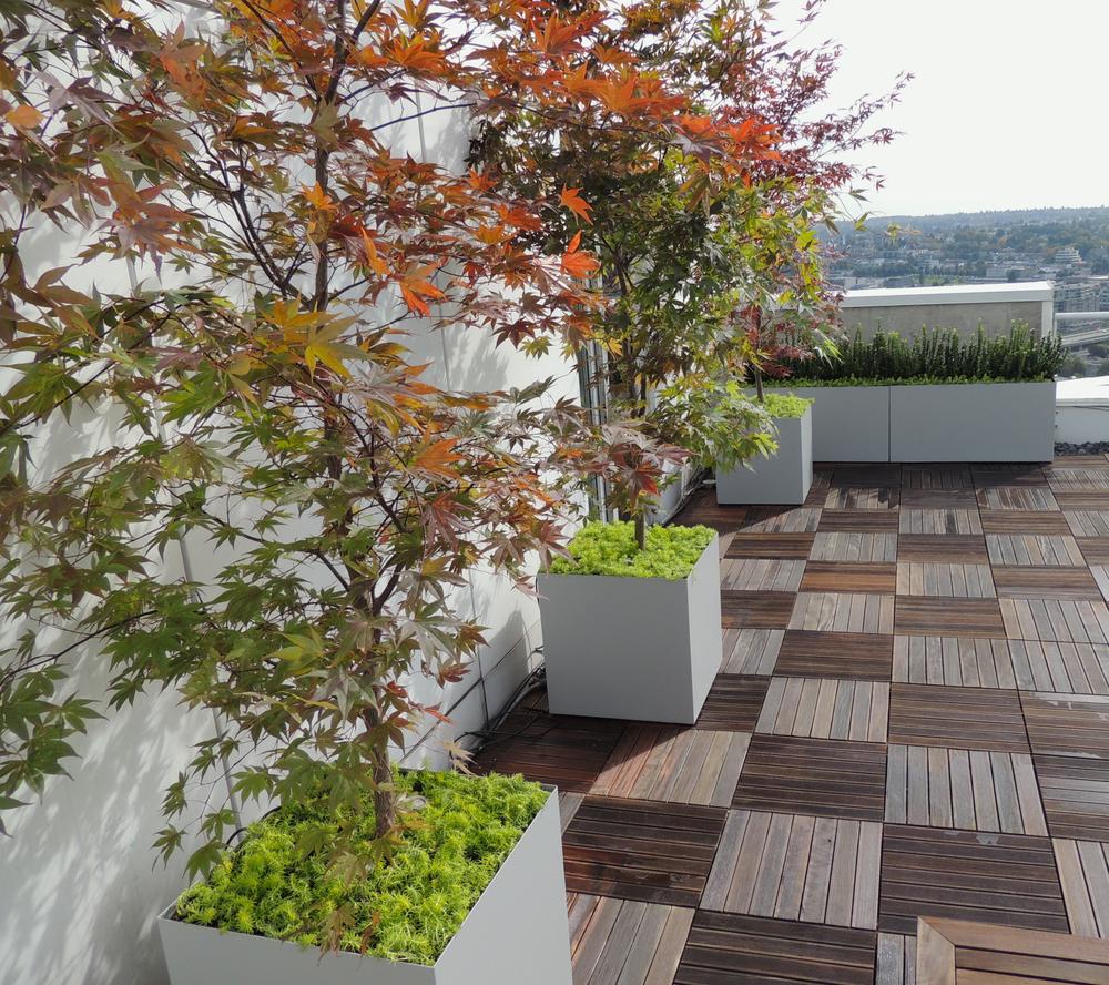 浅灰色盆景,诠释了具有现代感的简约自然。  At Object Outdoors.