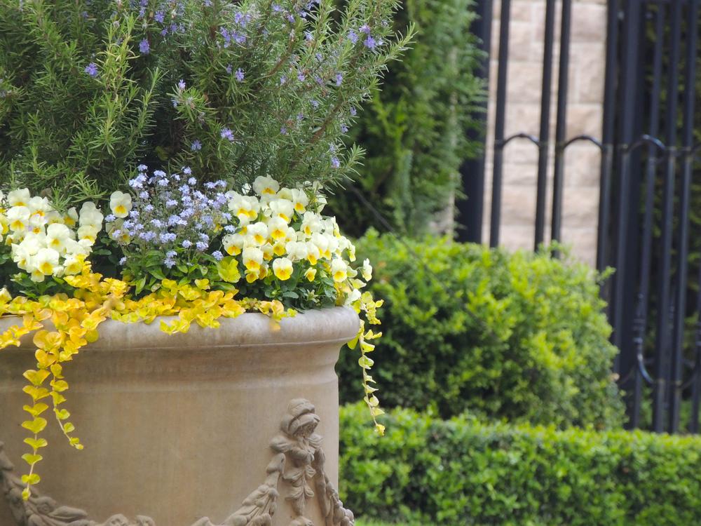 让柔美的花朵在优雅的花盆中绽放,感受春天的气息。 Designed by  Outdoor Elements Group  .