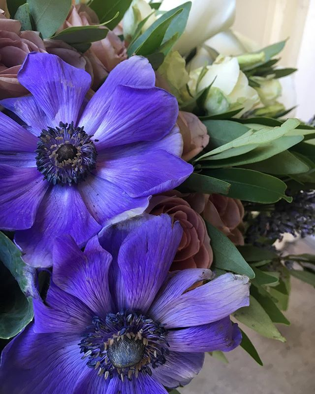 Close up 😍 no filter 😍😍 #houstonflowers #houstonflorist  #anemones