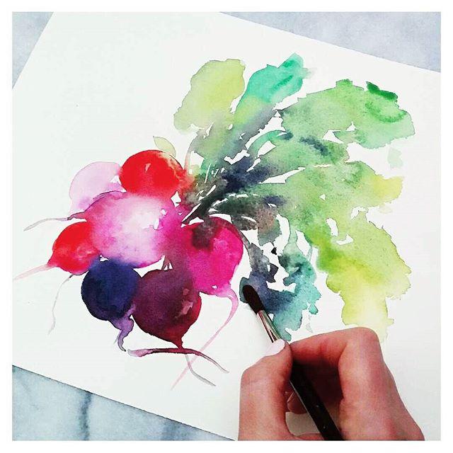 watercolour radishes botanical art