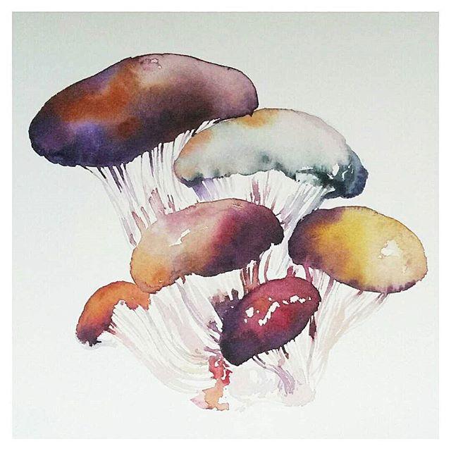waterclour mushrooms
